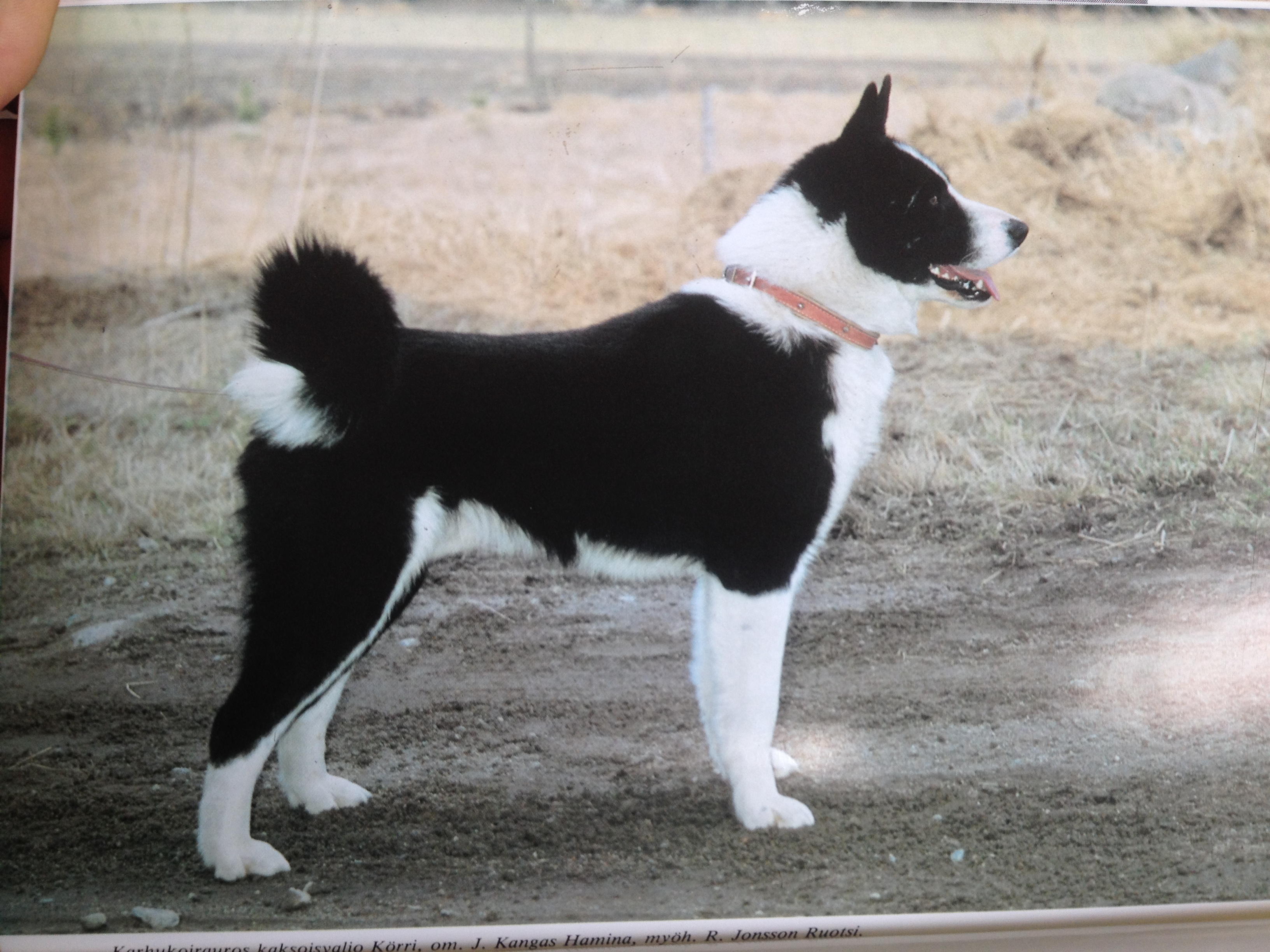 KBD History | Wind River Bear Institute (BearDogs)