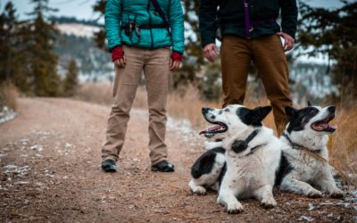 "Nice ""dogumentary"" from Rover.com on the Wind River Bear Institute and our KBDs!"